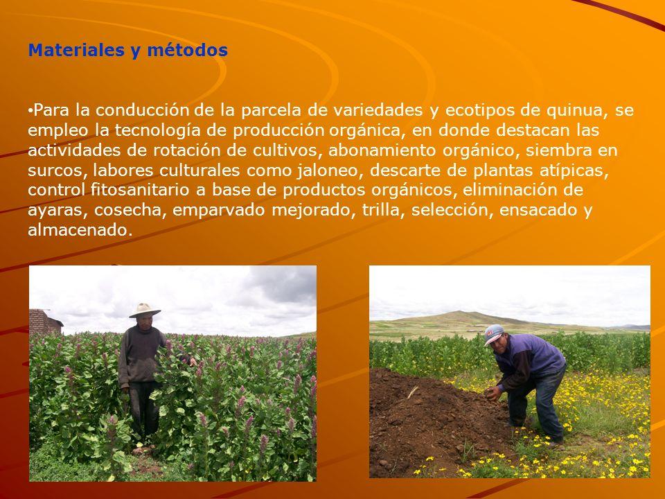 Materiales y métodos Para la conducción de la parcela de variedades y ecotipos de quinua, se empleo la tecnología de producción orgánica, en donde des