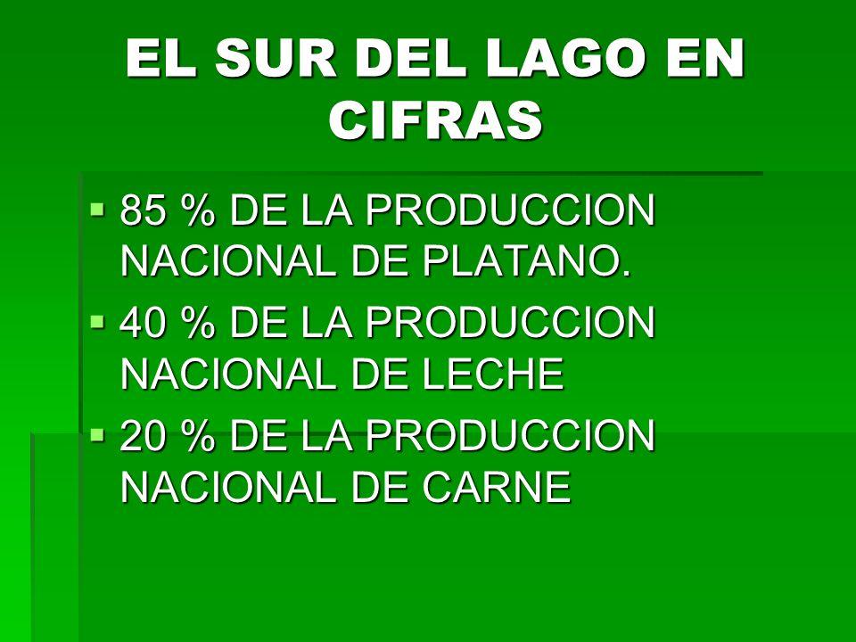 EL SUR DEL LAGO EN CIFRAS 85 % DE LA PRODUCCION NACIONAL DE PLATANO.