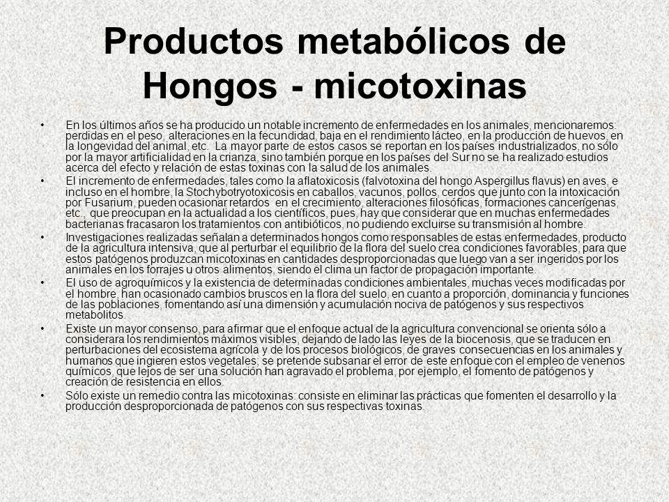 Productos metabólicos de Hongos - micotoxinas En los últimos años se ha producido un notable incremento de enfermedades en los animales, mencionaremos