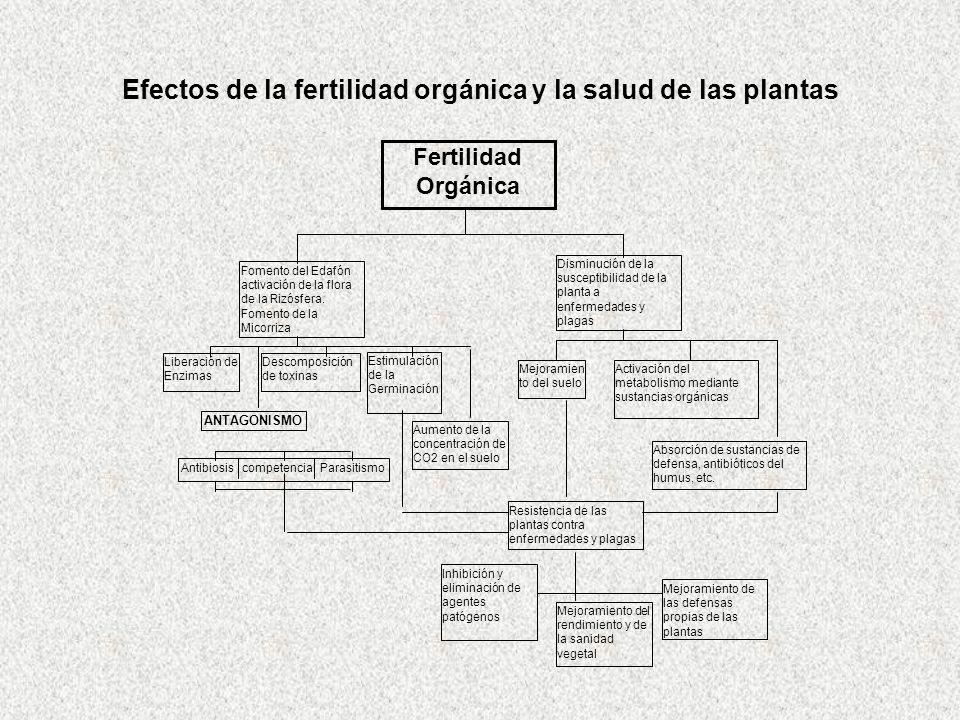 Efectos de la fertilidad orgánica y la salud de las plantas Fomento del Edafón activación de la flora de la Rizósfera. Fomento de la Micorriza Liberac