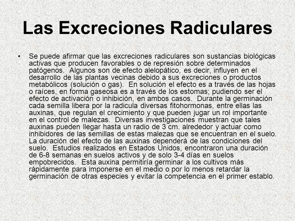 Las Excreciones Radiculares Se puede afirmar que las excreciones radiculares son sustancias biológicas activas que producen favorables o de represión