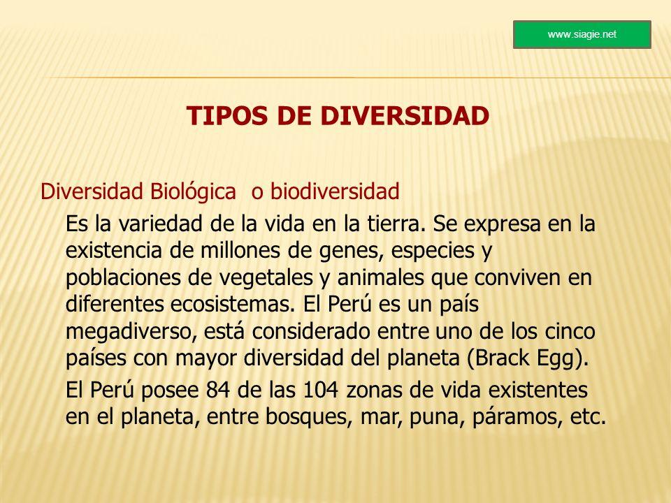 TIPOS DE DIVERSIDAD Diversidad Biológica o biodiversidad Es la variedad de la vida en la tierra. Se expresa en la existencia de millones de genes, esp