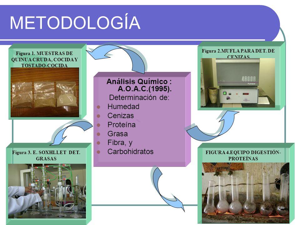 METODOLOGÍA Análisis Químico : A.O.A.C.(1995). Determinación de: Humedad Cenizas Proteína Grasa Fibra, y Carbohidratos Figura 1. MUESTRAS DE QUINUA CR