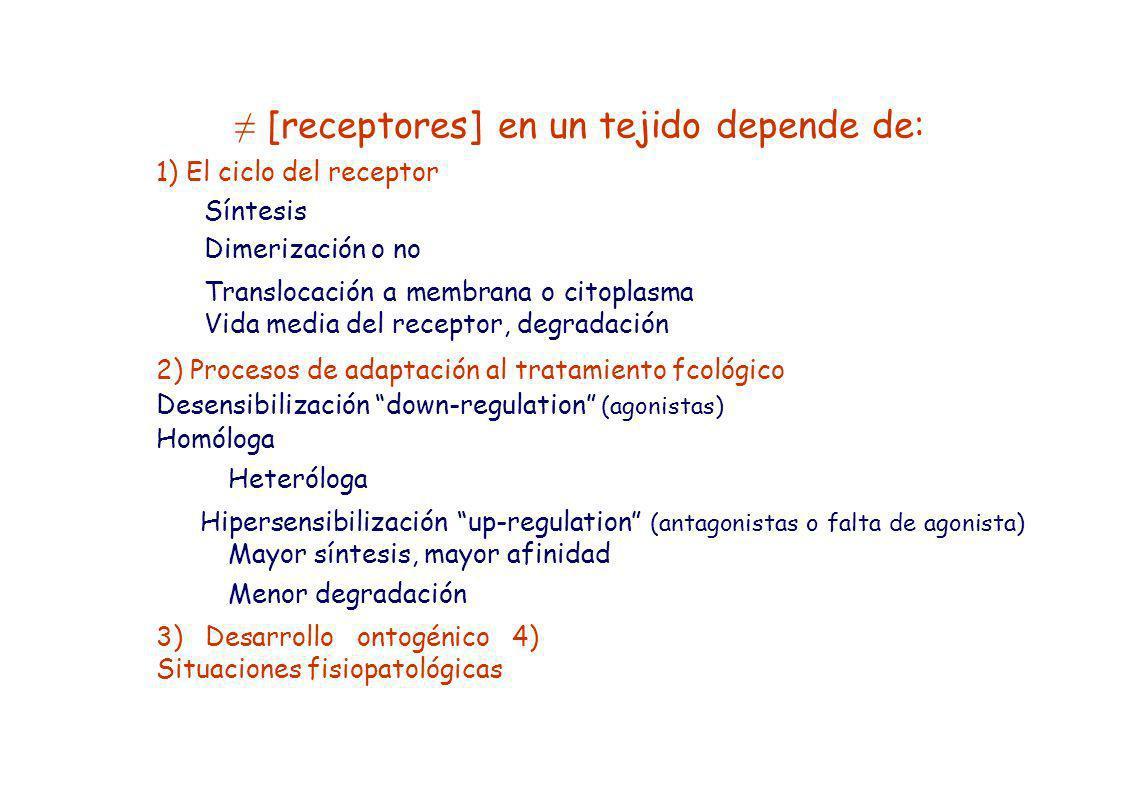 [receptores] en un tejido depende de: 1) El ciclo del receptor Síntesis Dimerización o no Translocación a membrana o citoplasma Vida media del recepto