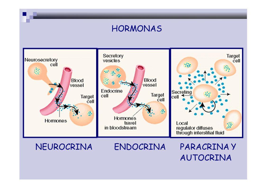 RECEPTORES: proteínas membranales (más abundantes) o intracelulares en la células dianas.