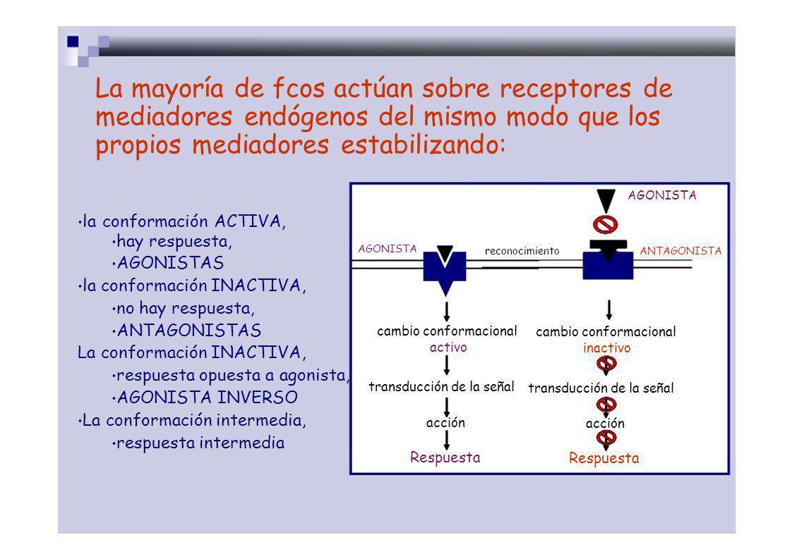 La mayoría de fcos actúan sobre receptores de mediadores endógenos del mismo modo que los propios mediadores estabilizando: AGONISTA la conformación A