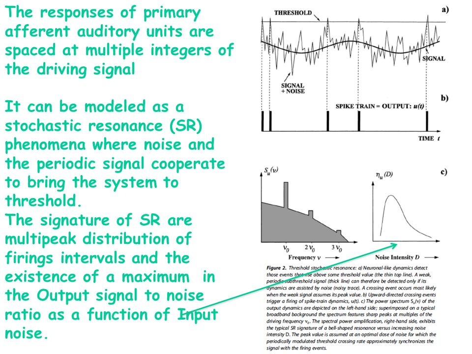 The responses of primary afferent auditory units are spaced at multiple integers of the driving signal It can be modeled as a stochastic resonance (SR) phenomena where noise and the periodic signal cooperate to bring the system to threshold.