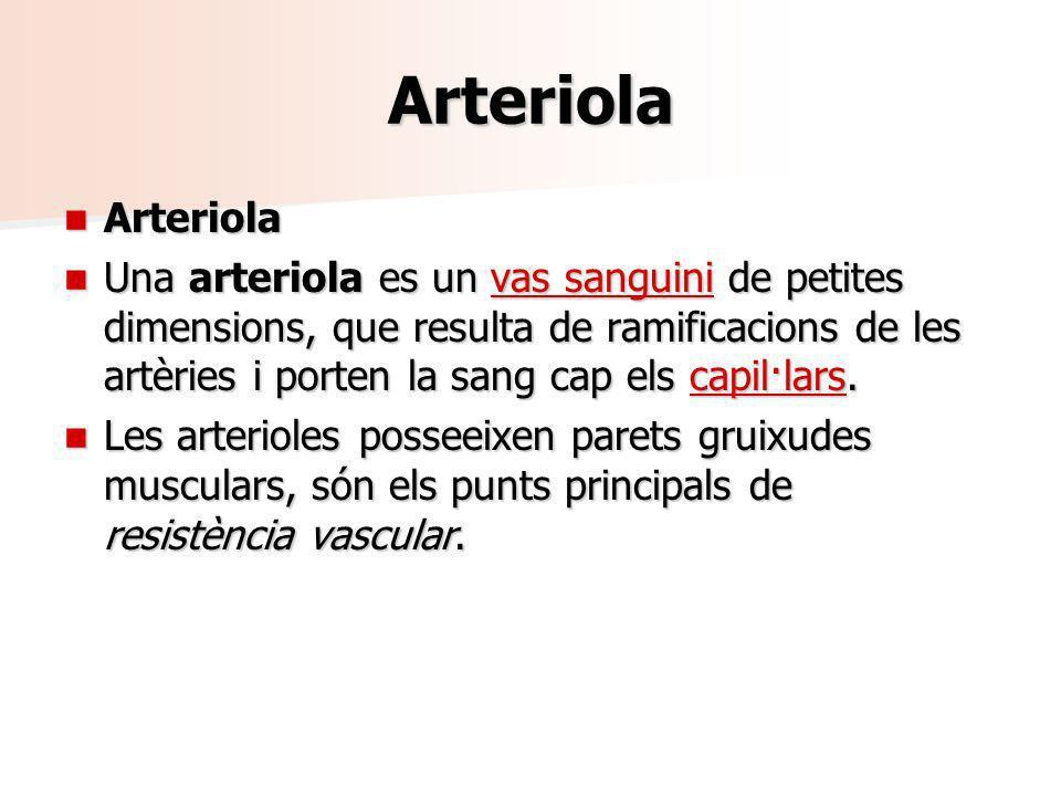 Arteriola Arteriola Arteriola Una arteriola es un vas sanguini de petites dimensions, que resulta de ramificacions de les artèries i porten la sang ca