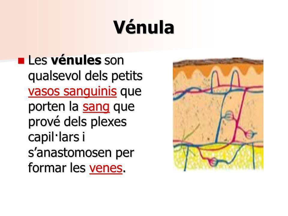 Vénula Les vénules son qualsevol dels petits vasos sanguinis que porten la sang que prové dels plexes capil·lars i sanastomosen per formar les venes.