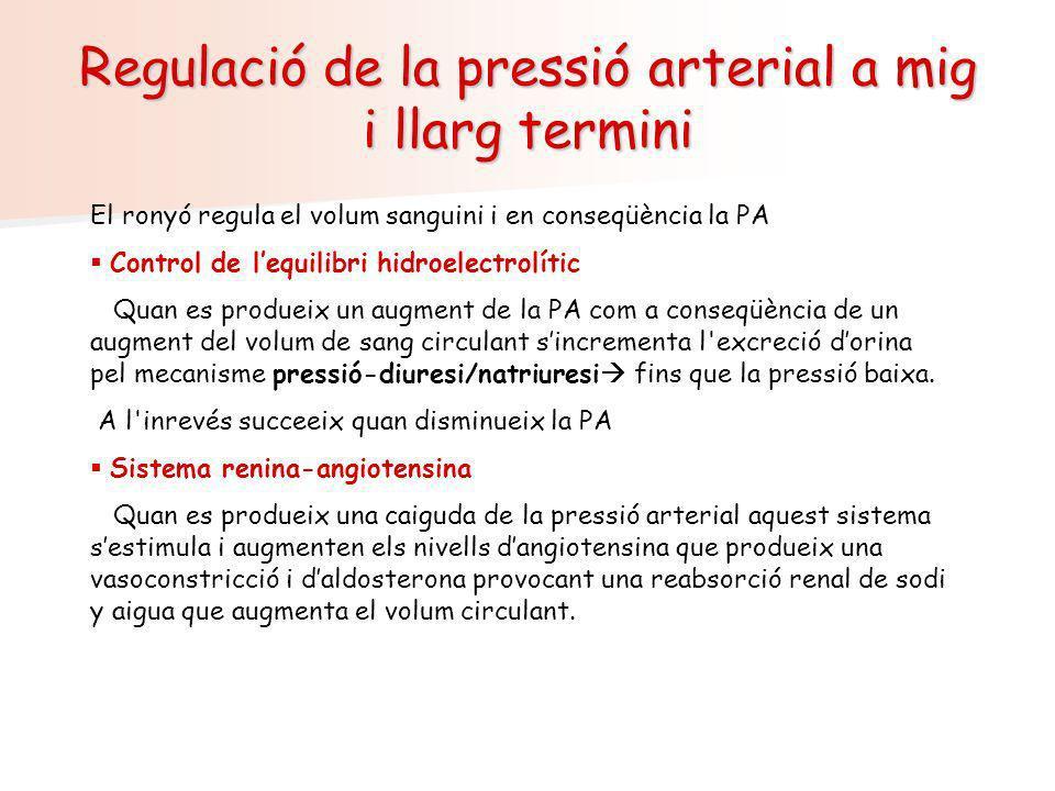Regulació de la pressió arterial a mig i llarg termini El ronyó regula el volum sanguini i en conseqüència la PA Control de lequilibri hidroelectrolít