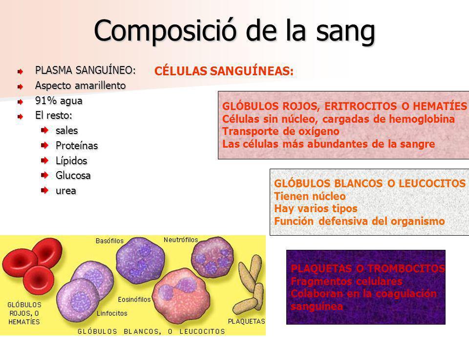 Composició de la sang PLASMA SANGUÍNEO: Aspecto amarillento 91% agua El resto: sales Proteínas Lípidos Glucosa urea GLÓBULOS ROJOS, ERITROCITOS O HEMA