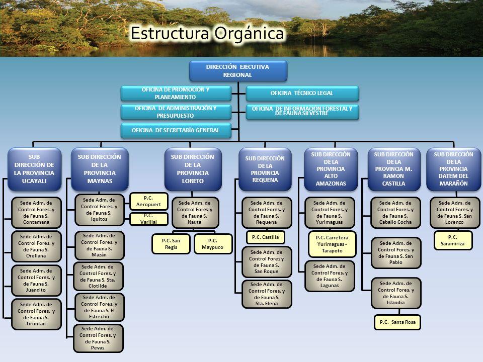 DIRECCIÓN EJECUTIVA REGIONAL OFICINA DE PROMOCIÓN Y PLANEAMIENTO OFICINA TÉCNICO LEGAL OFICINA DE ADMINISTRACIÓN Y PRESUPUESTO OFICINA DE INFORMACIÓN FORESTAL Y DE FAUNA SILVESTRE OFICINA DE SECRETARÍA GENERAL SUB DIRECCIÓN DE LA PROVINCIA DATEM DEL MARAÑÓN SUB DIRECCIÓN DE LA PROVINCIA UCAYALI SUB DIRECCIÓN DE LA PROVINCIA ALTO AMAZONAS SUB DIRECCIÓN DE LA PROVINCIA M.