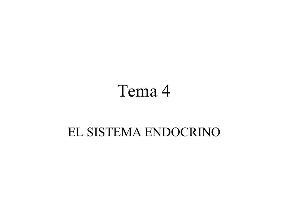 Tema 4 EL SISTEMA ENDOCRINO