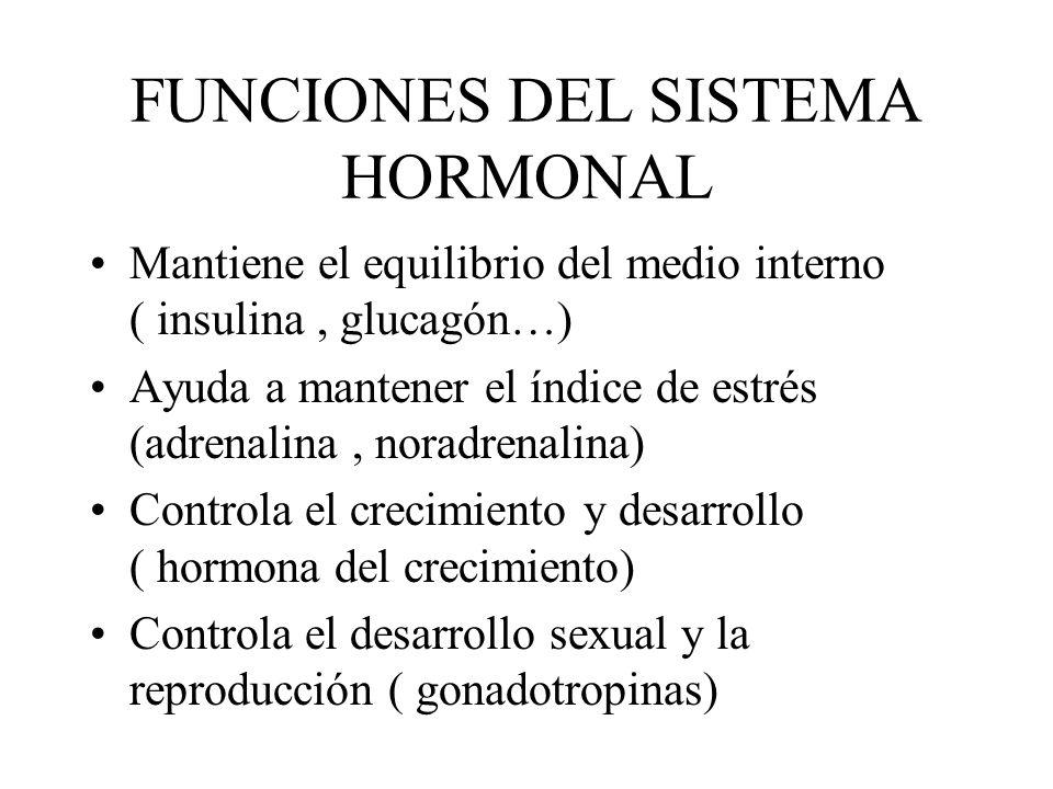 FUNCIONES DEL SISTEMA HORMONAL Mantiene el equilibrio del medio interno ( insulina, glucagón…) Ayuda a mantener el índice de estrés (adrenalina, norad