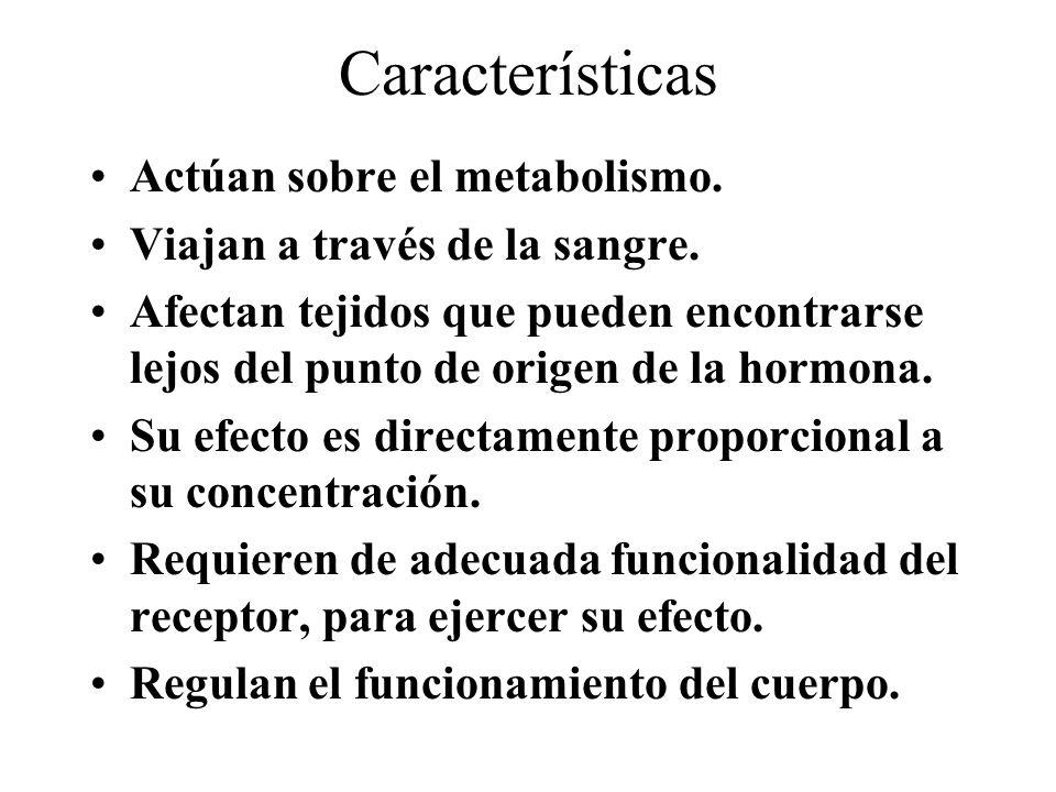 Características Actúan sobre el metabolismo. Viajan a través de la sangre. Afectan tejidos que pueden encontrarse lejos del punto de origen de la horm