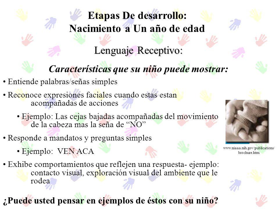 Etapas De desarrollo: Nacimiento a Un año de edad Lenguaje Receptivo: Características que su niño puede mostrar: Entiende palabras/señas simples Recon