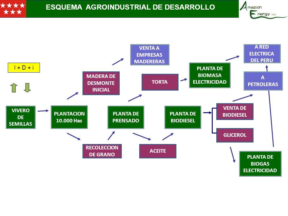 2.- ESQUEMA DE ESTRUCTURA SOCIETARIA ESQUEMA AGROINDUSTRIAL DE DESARROLLO VIVERO DE SEMILLAS PLANTACION 10.000 Has PLANTA DE PRENSADO PLANTA DE BIODIE