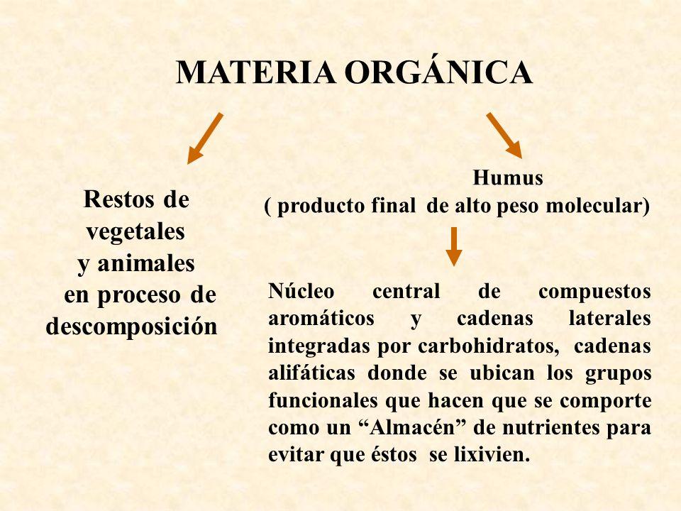 Humus ( producto final de alto peso molecular) MATERIA ORGÁNICA Restos de vegetales y animales en proceso de descomposición Núcleo central de compuest