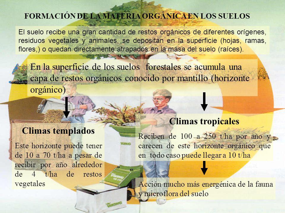 FORMACIÓN DE LA MATERIA ORGÁNICA EN LOS SUELOS El suelo recibe una gran cantidad de restos orgánicos de diferentes orígenes, residuos vegetales y anim