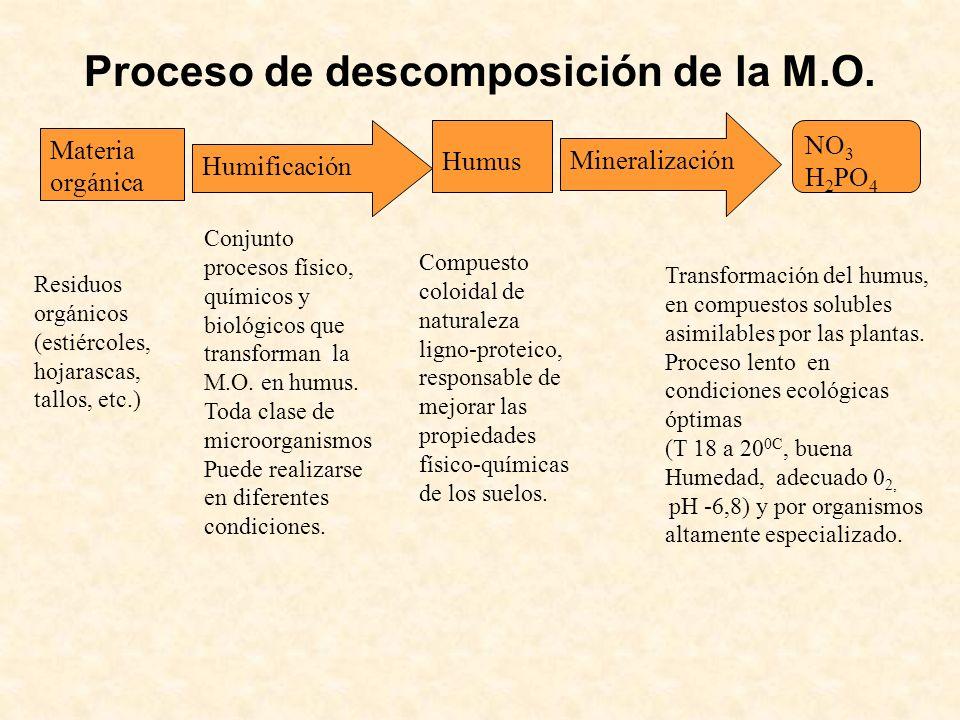 Proceso de descomposición de la M.O. Materia orgánica Humificación Humus Mineralización NO 3 H 2 PO 4 Conjunto procesos físico, químicos y biológicos