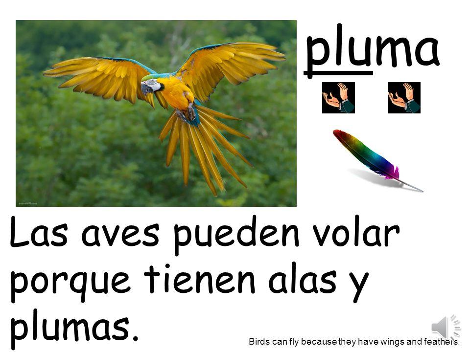 pluma Las aves pueden volar porque tienen alas y plumas.
