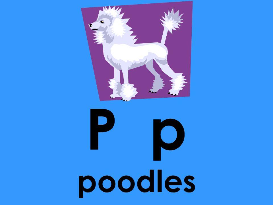P p poodles o