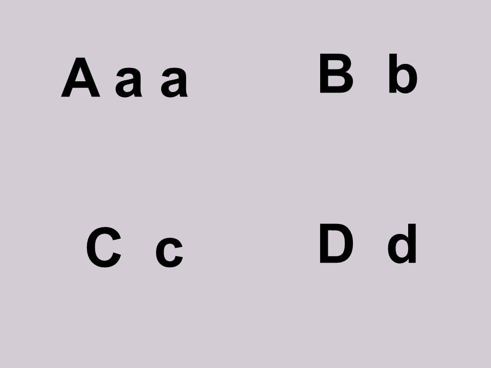 A a a B b C c D d