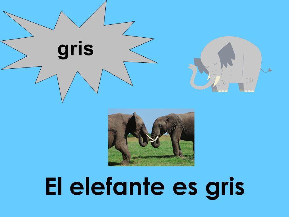 El elefante es gris gris