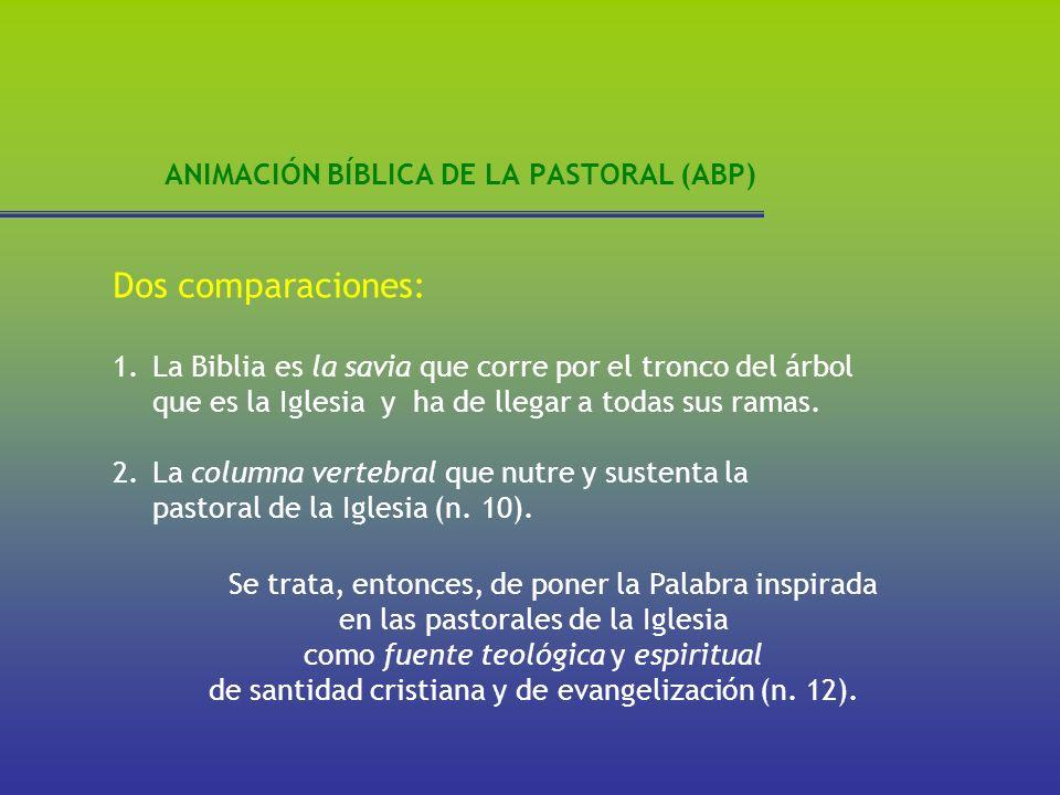 ANIMACIÓN BÍBLICA DE LA PASTORAL (ABP) Dos comparaciones: 1.La Biblia es la savia que corre por el tronco del árbol que es la Iglesia y ha de llegar a