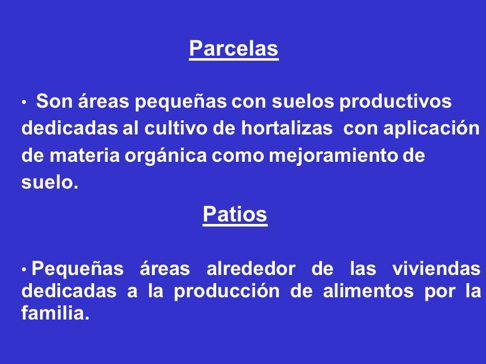 Son áreas pequeñas con suelos productivos dedicadas al cultivo de hortalizas con aplicación de materia orgánica como mejoramiento de suelo. Parcelas P