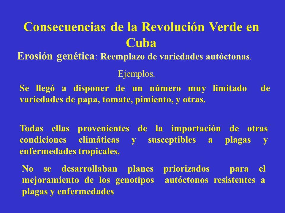 Consecuencias de la Revolución Verde en Cuba Erosión genética : Reemplazo de variedades autóctonas. Se llegó a disponer de un número muy limitado de v