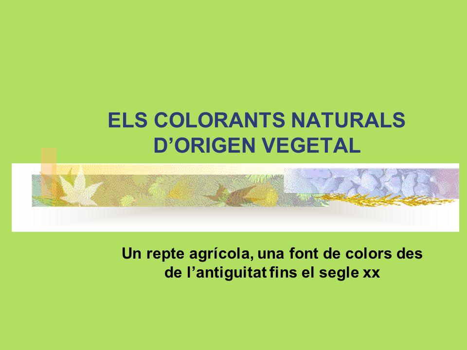 ELS COLORANTS NATURALS DORIGEN VEGETAL Un repte agrícola, una font de colors des de lantiguitat fins el segle xx