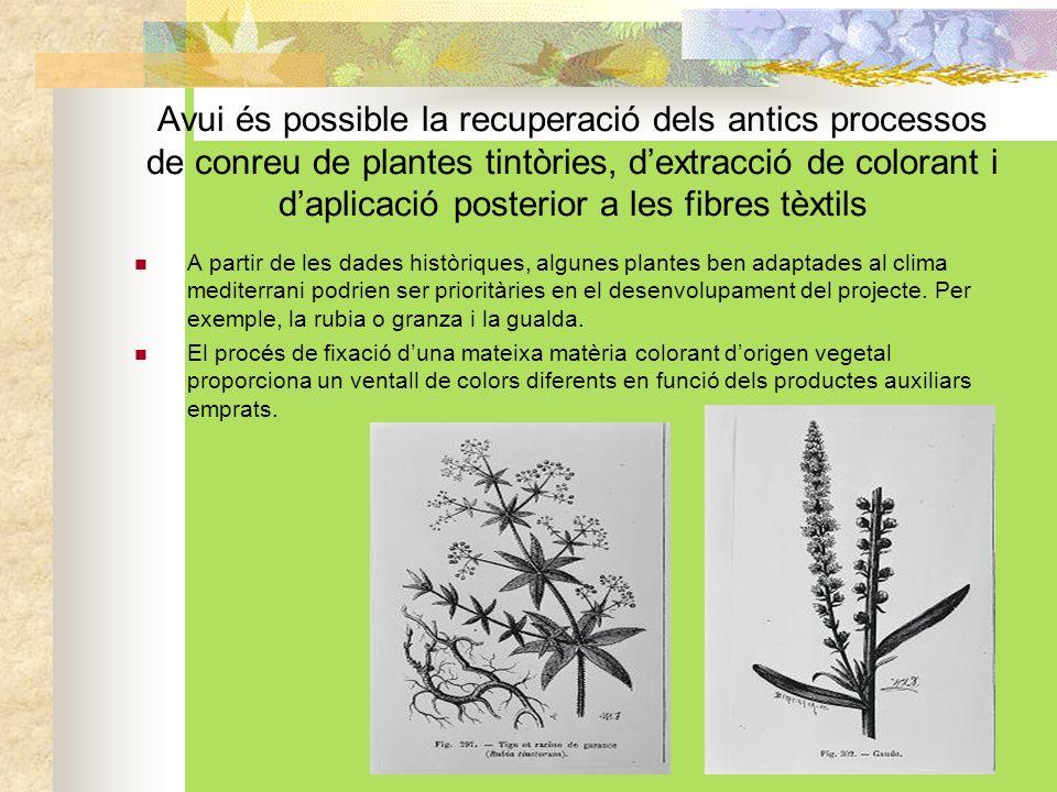 Avui és possible la recuperació dels antics processos de conreu de plantes tintòries, dextracció de colorant i daplicació posterior a les fibres tèxtils A partir de les dades històriques, algunes plantes ben adaptades al clima mediterrani podrien ser prioritàries en el desenvolupament del projecte.