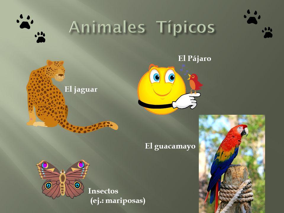 El jaguar El Pájaro El guacamayo Insectos (ej.: mariposas)