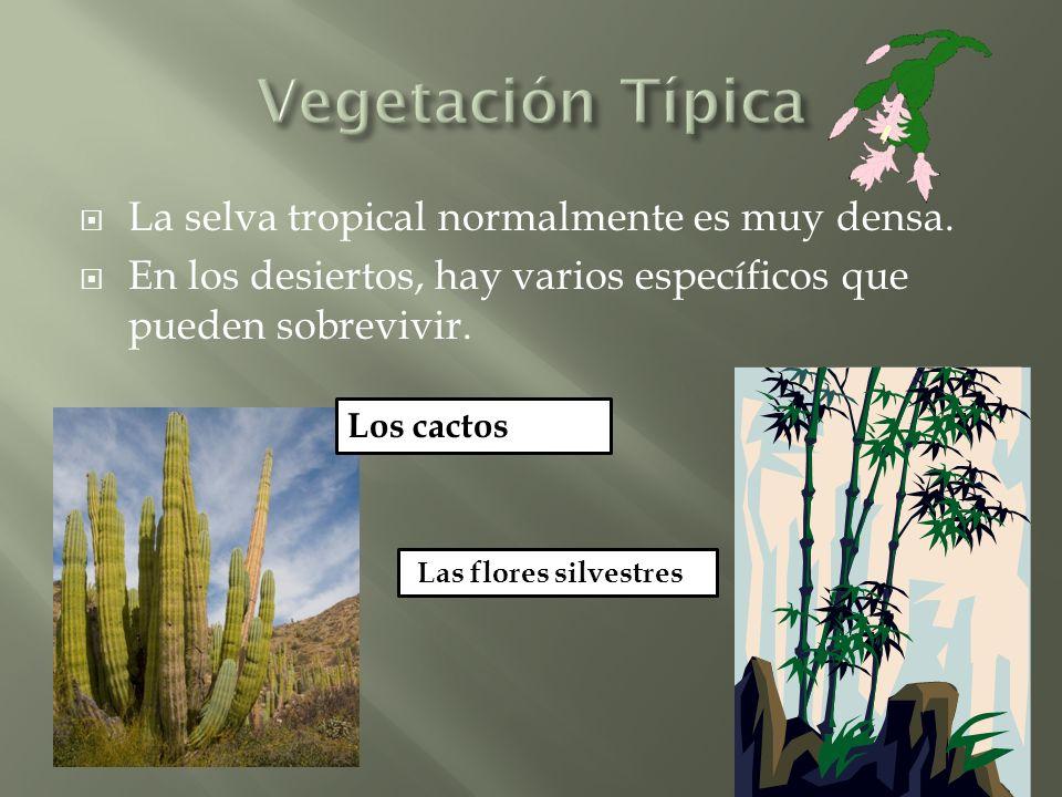 La selva tropical normalmente es muy densa.