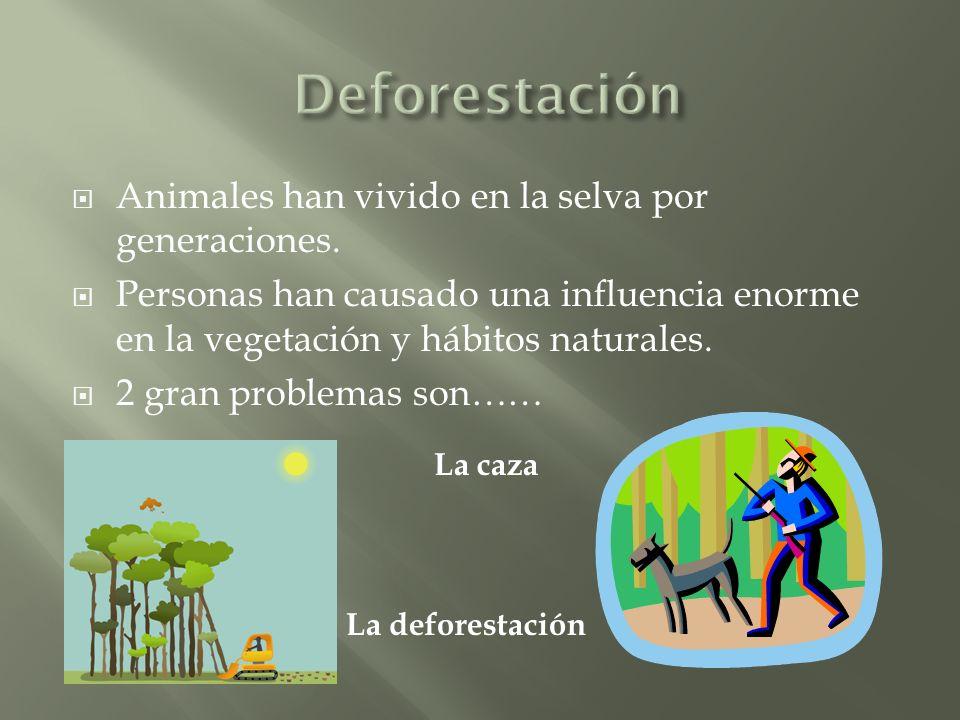 Animales han vivido en la selva por generaciones.