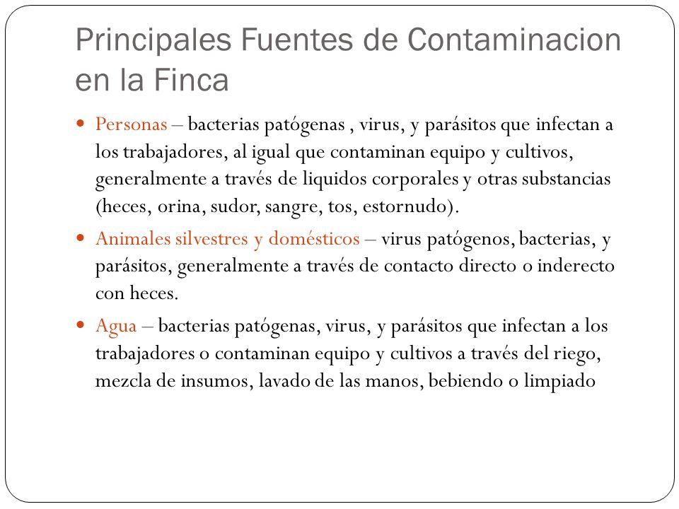 Principales Fuentes de Contaminacion en la Finca Personas – bacterias patógenas, virus, y parásitos que infectan a los trabajadores, al igual que cont