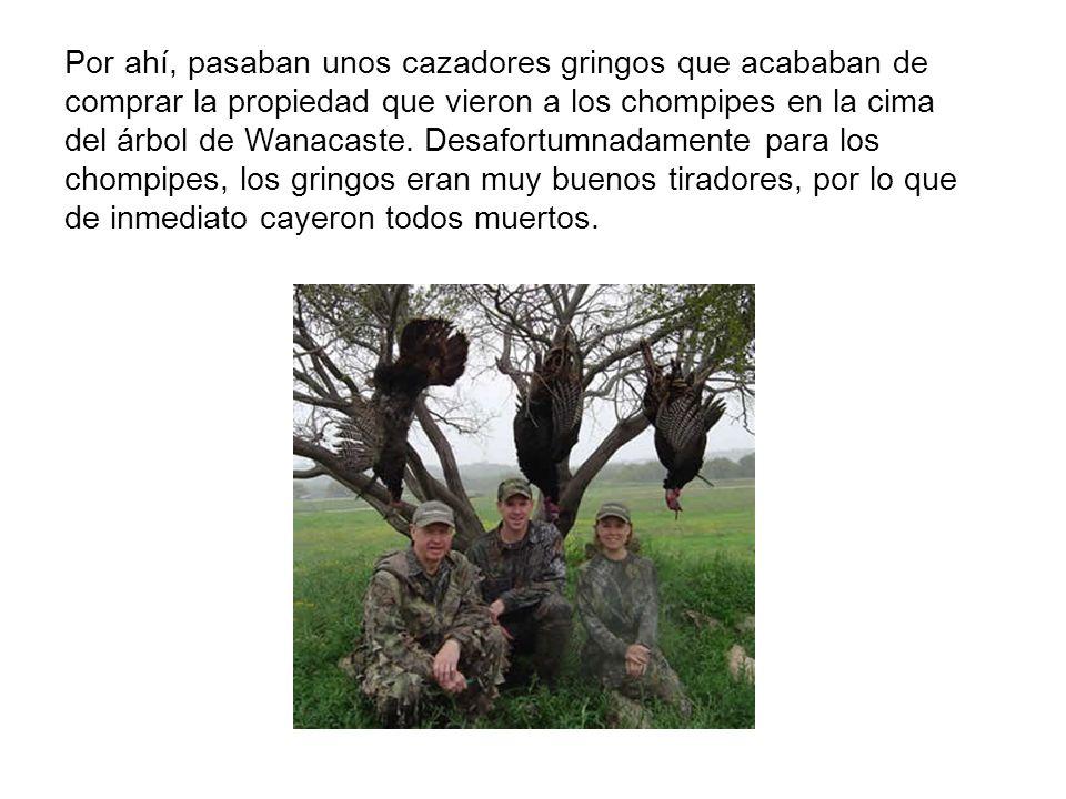 Por ahí, pasaban unos cazadores gringos que acababan de comprar la propiedad que vieron a los chompipes en la cima del árbol de Wanacaste. Desafortumn