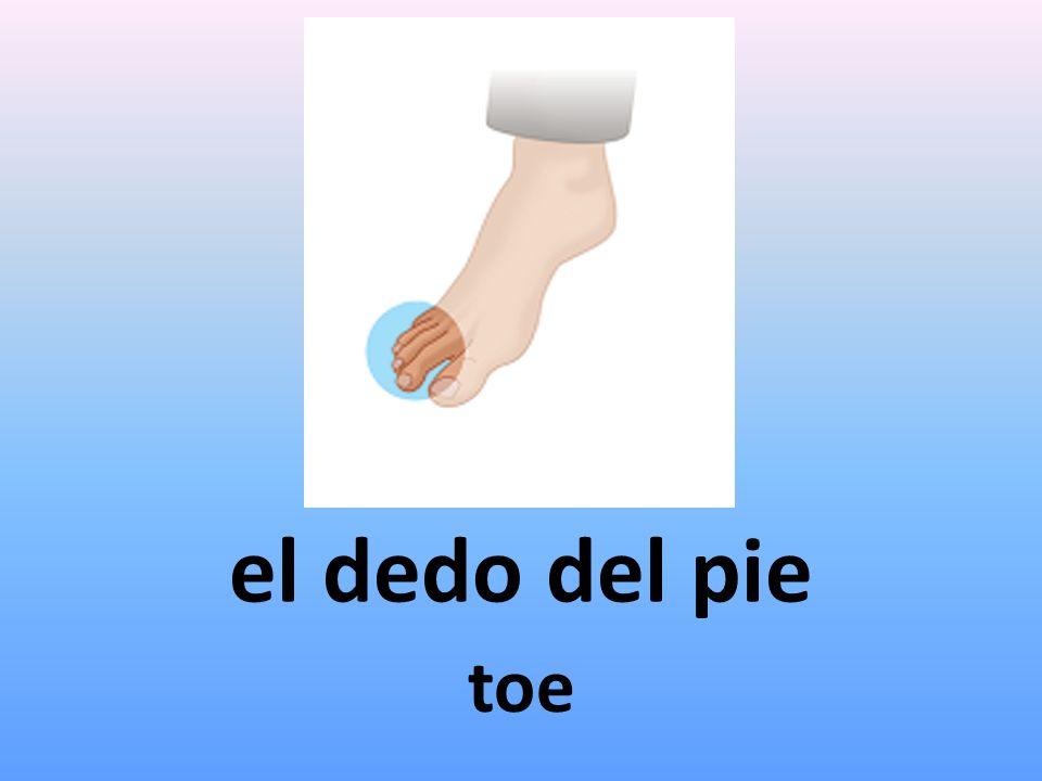 el dedo del pie toe