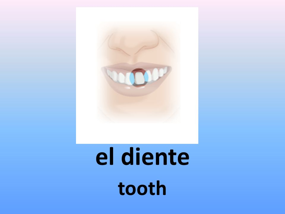 el diente tooth