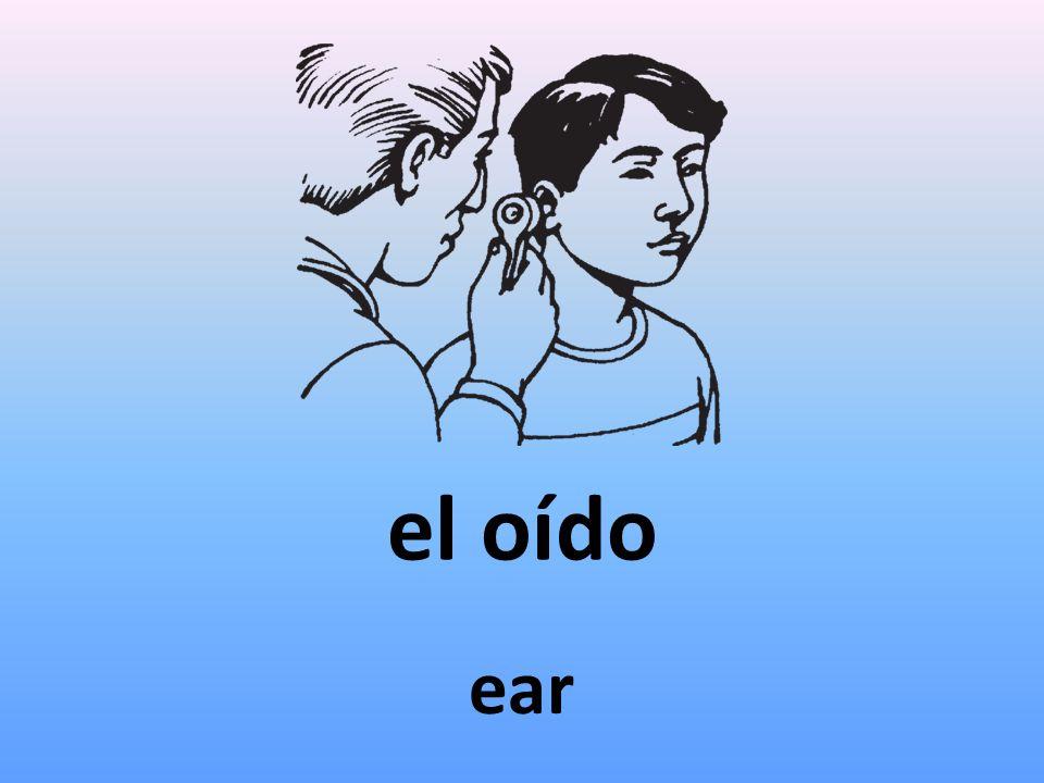 el oído ear