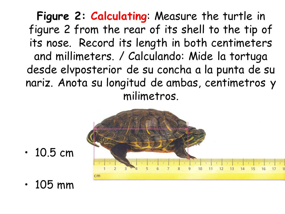 Asegurate de saber que: One centimeter is divided into how many millimeters? Un centimetro esta dividido en cuantos milimetros? 10 millimeters / milim