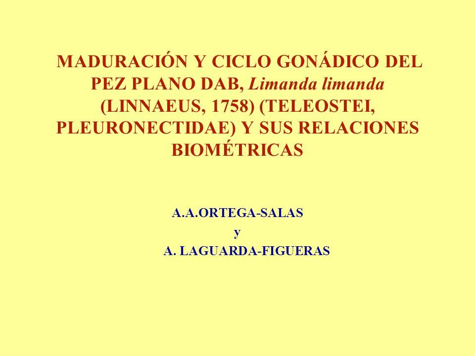 MADURACIÓN Y CICLO GONÁDICO DEL PEZ PLANO DAB, Limanda limanda (LINNAEUS, 1758) (TELEOSTEI, PLEURONECTIDAE) Y SUS RELACIONES BIOMÉTRICAS A.A.ORTEGA-SALAS y A.