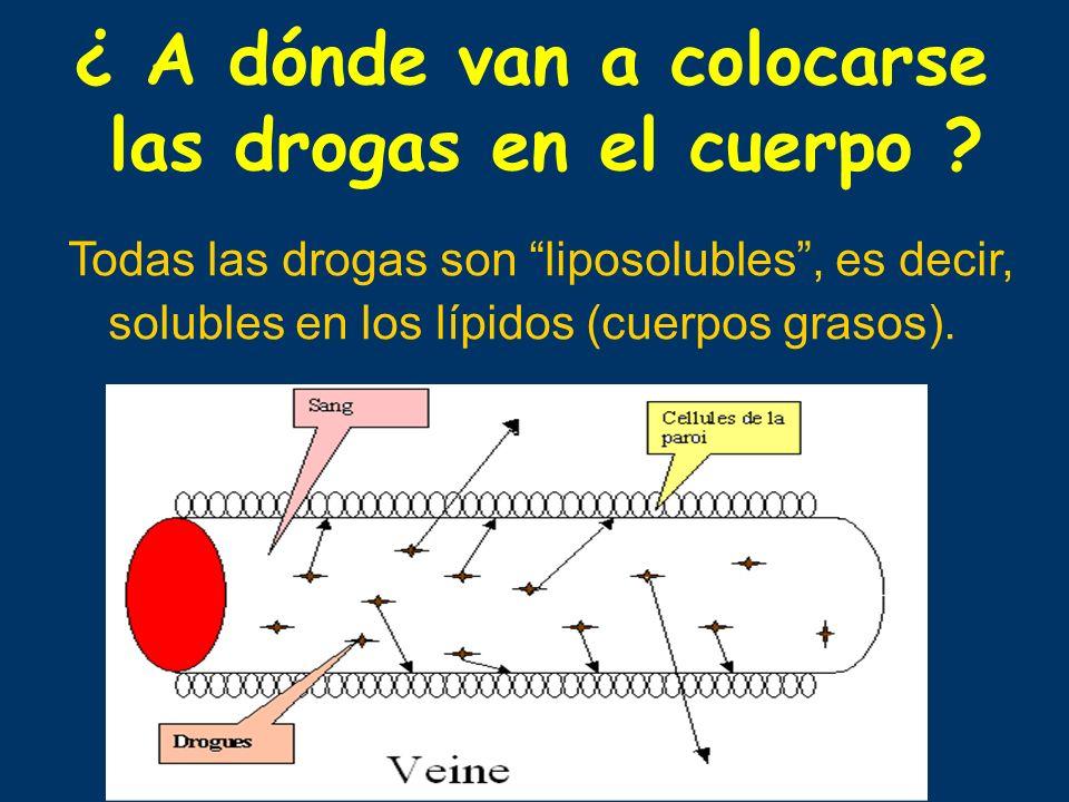 ¿ A dónde van a colocarse las drogas en el cuerpo ? Todas las drogas son liposolubles, es decir, solubles en los lípidos (cuerpos grasos).