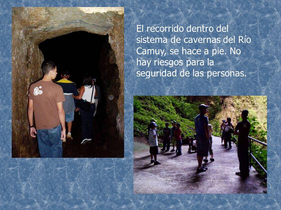 Dentro de las cuevas, podemos encontrar estructuras como las estalactitas, estalagmitas y pequeños depósitos de agua.
