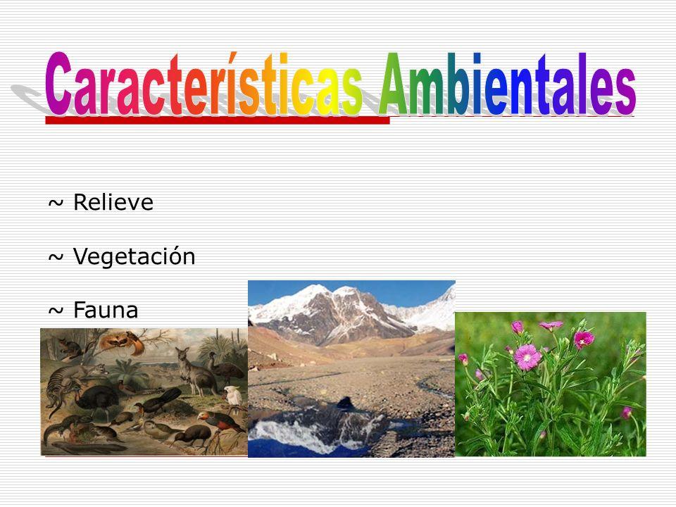 ~ Relieve ~ Vegetación ~ Fauna
