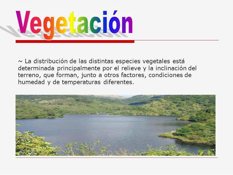 ~ La distribución de las distintas especies vegetales está determinada principalmente por el relieve y la inclinación del terreno, que forman, junto a