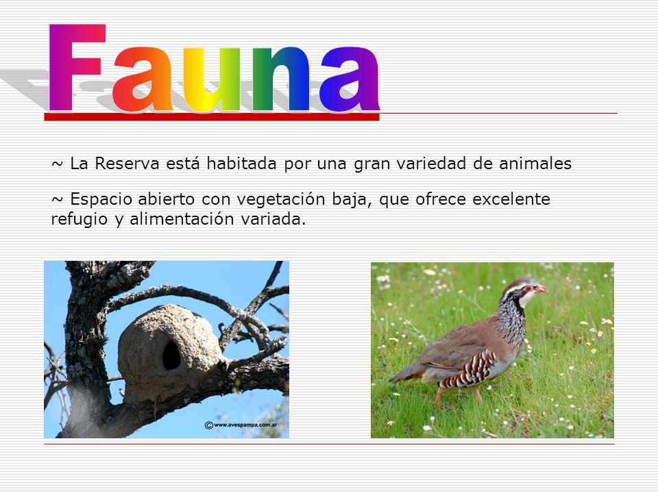 ~ La Reserva está habitada por una gran variedad de animales ~ Espacio abierto con vegetación baja, que ofrece excelente refugio y alimentación variad