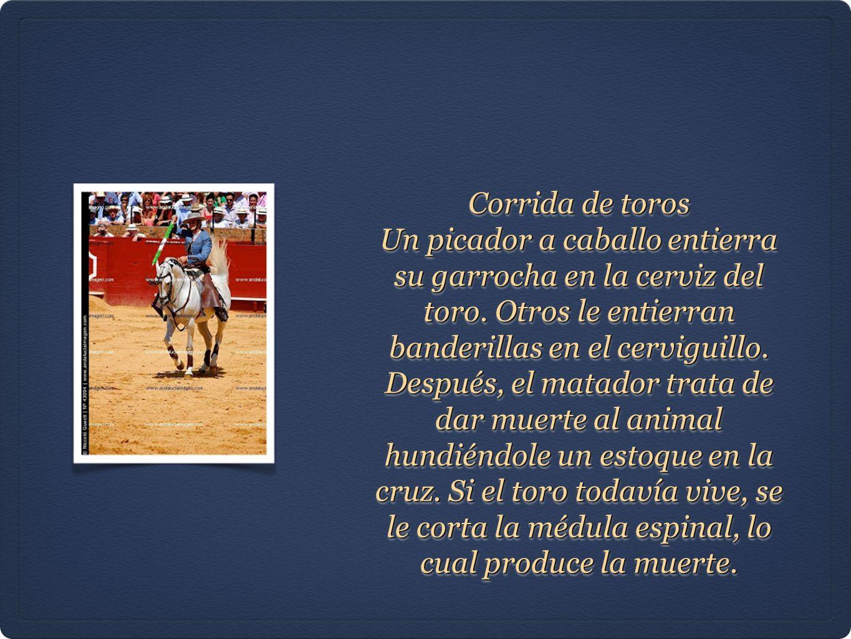 Corrida de toros Un picador a caballo entierra su garrocha en la cerviz del toro. Otros le entierran banderillas en el cerviguillo. Después, el matado
