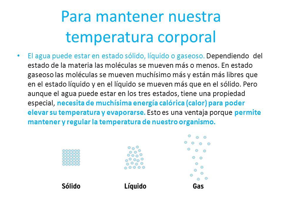 Para mantener nuestra temperatura corporal El agua puede estar en estado sólido, líquido o gaseoso. Dependiendo del estado de la materia las moléculas